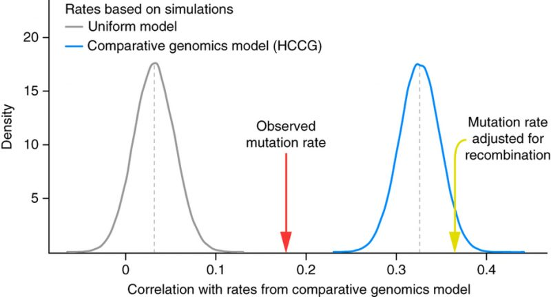 This figure from a 2015 figure really makes this clear. The grey curve shows the negative control: uniform mutation rate across the genome. The blue curve shows the positive control: a mechanism free that perfectly fits the observed divergence data. The first arrow shows how well observed mutations rate fit the data (half way between grey and blue). The second arrow shows that taking into account observed mutation rate and recombination rate together entirely explains all the spatial variation in human-chimp divergence. This is an entirely expected observation starting from common descent. From design, no principle explains why divergence should correlate so well mutation and recombination. This is very strong evidence for common descent. It is odd that this would be raised as evidence against it.