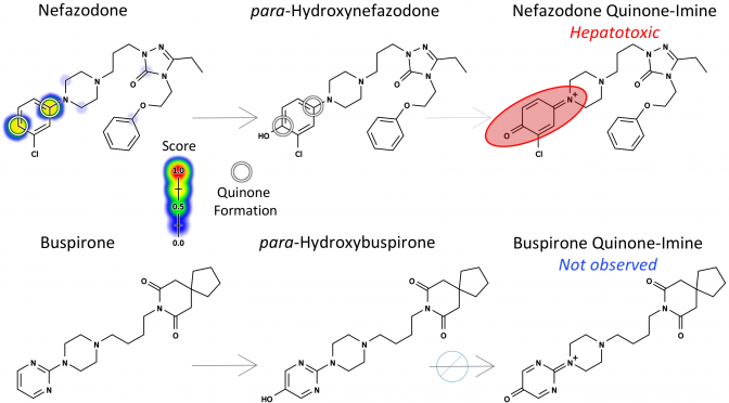 Deep Learning to Predict the Formation of Quinone Species in Drug Metabolism